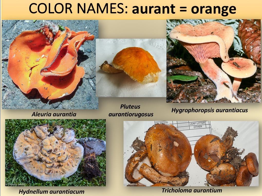 WHAT FUNGI NAMES MEAN